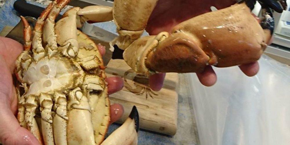 STORE krabbeklør i dag