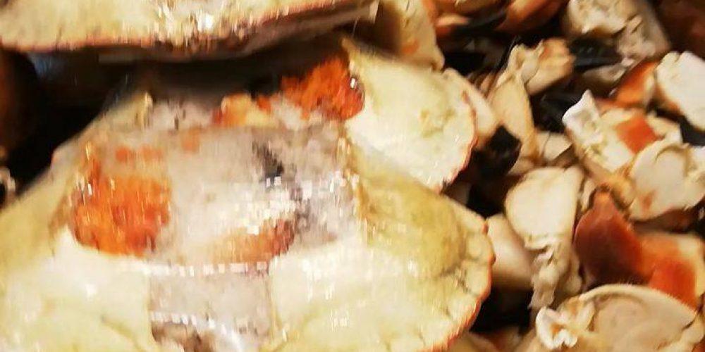 #neptun #neptunfisk #amfi #amfimoa #skalldyr …